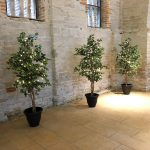 evergreen_trees_extremely_lovely_weddings